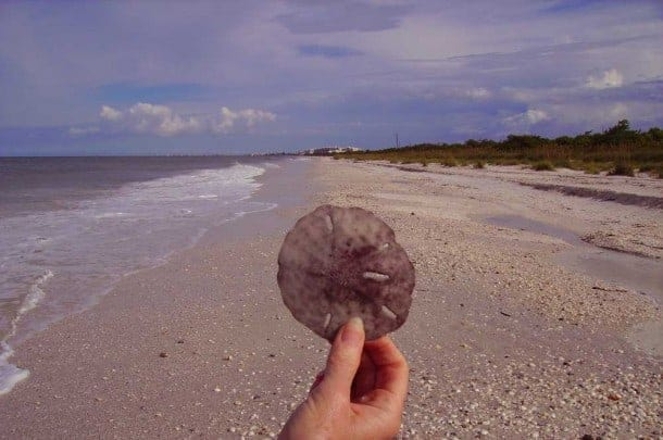 Lucky visitors find sand dollars at Barefoot Beach in Bonita Beach, a quiet beach in Florida that has been ranked as one of the state's best. (Photo: David Blasco)