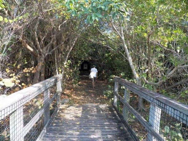 Trail on Munyon Island, John D. MacArthur Beach State Park