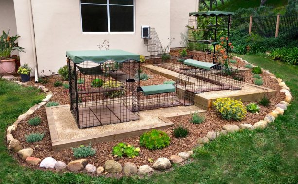 a connected cat enclosure with beautiful landscape design