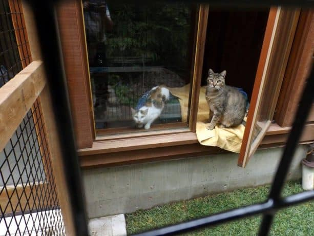the enclosure is accessible through a window instead of a cat door insert