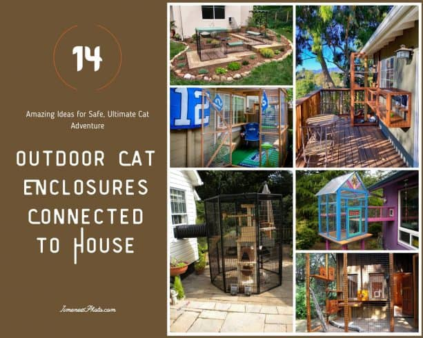 Outdoor Cat Enclosures Connected to House: 14 Amazing Ideas for Safe, Ultimate Cat Adventure