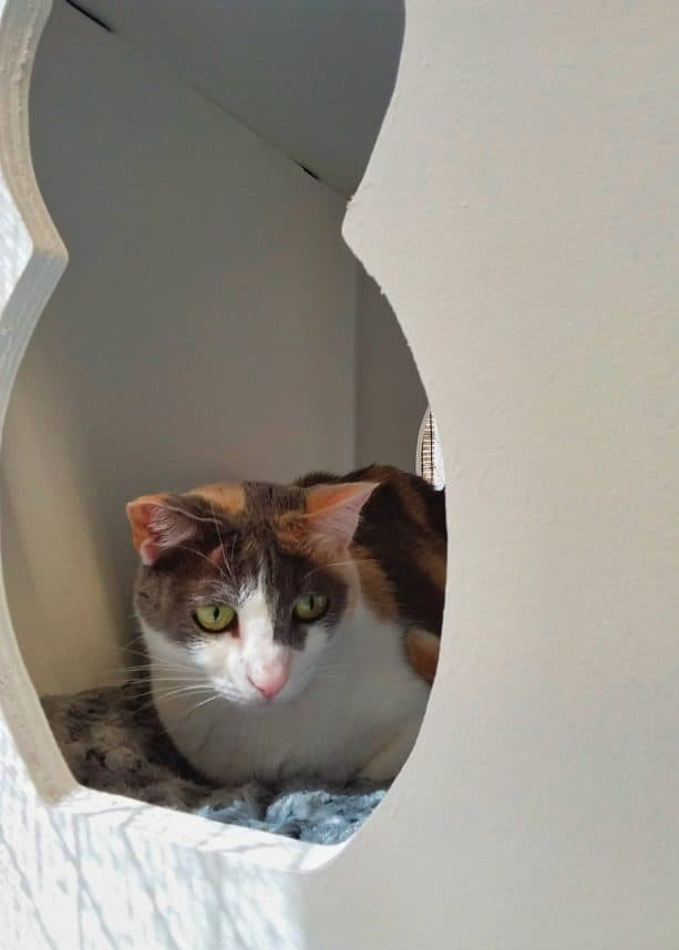 the kittie is enjoying her time in the white hideout with cute cat-shaped cutout