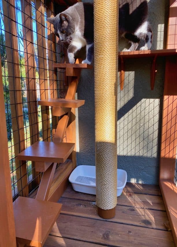 there is a beautiful wooden floating steps provided inside so the cat can access the lower area with litter box easily