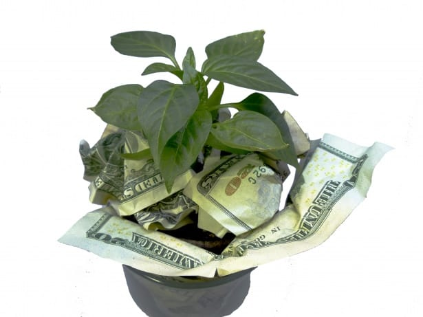 Save money with aquaponics