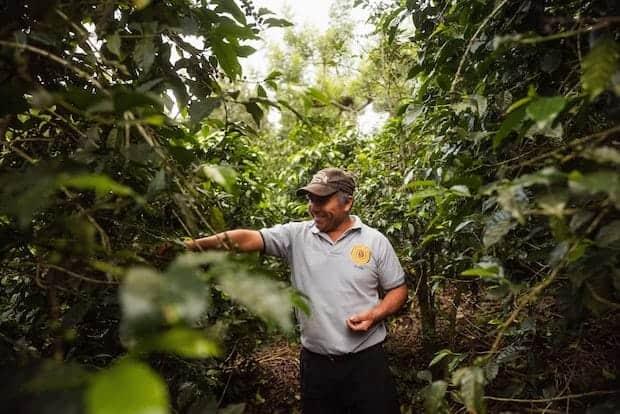 A coffee farmer among his plants