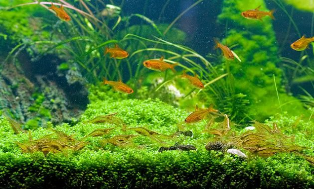 3 Best Algae Eating Shrimp for Freshwater Aquarium ...