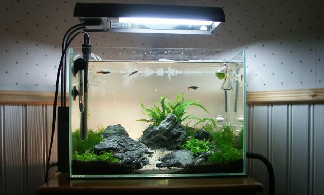 How to Set Up Simple Aquascape with Iwagumi Style