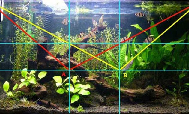 Understanding the Golden Ratio in the Aquascape