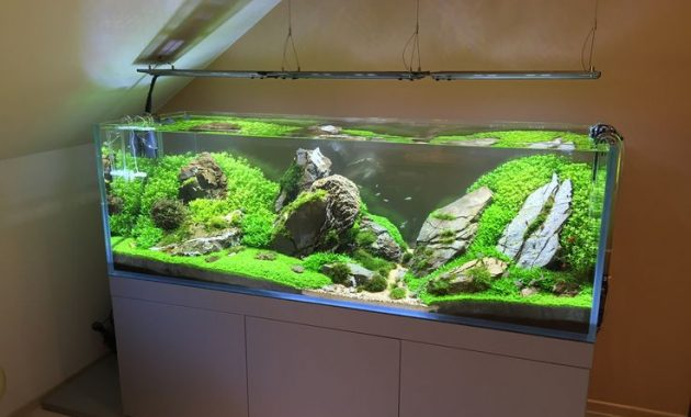 Mistakes that Often Occur When Making Aquascape