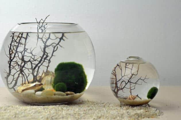 The Easiest Aquarium Plants For Beginner Aegagropila Linnaei Known as Marimo Moss Balls