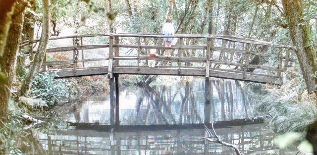 pooh Christopher robin hundred acre wood bridge