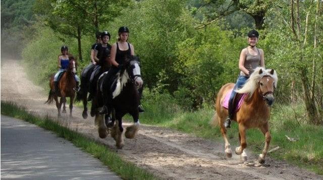 Drents Friese Wold paardrijden