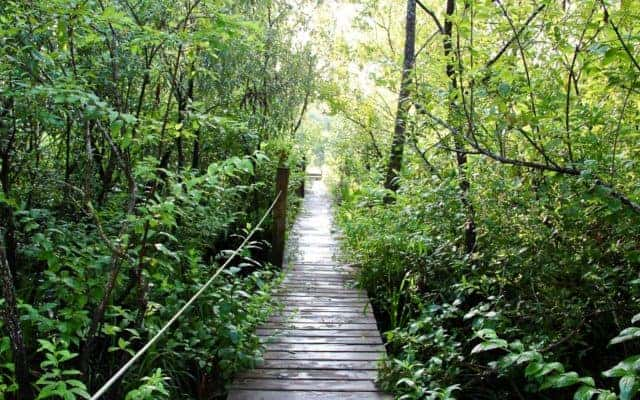 Tiger Creek Nature Conservancy Florida hiking trails: 5 favorites for fall hiking