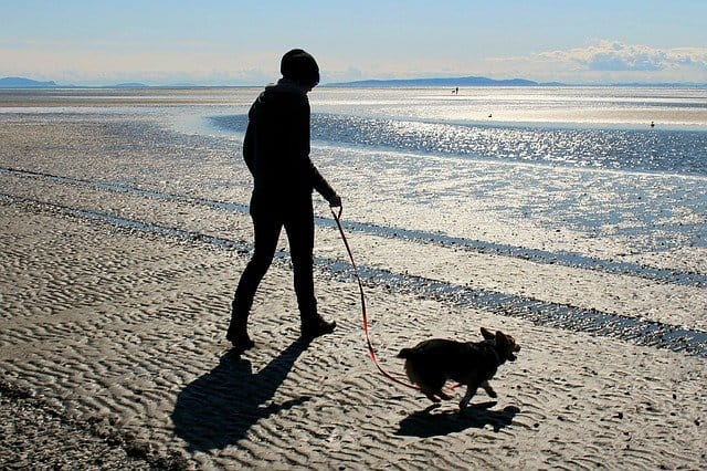 What are the benefits of walking your dog daily