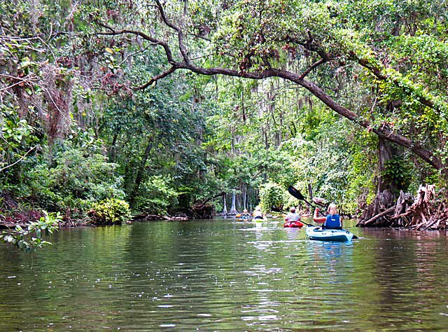 while Tree canopy kayaking Dora Canal (Photo: Ed and Deb Higgins)