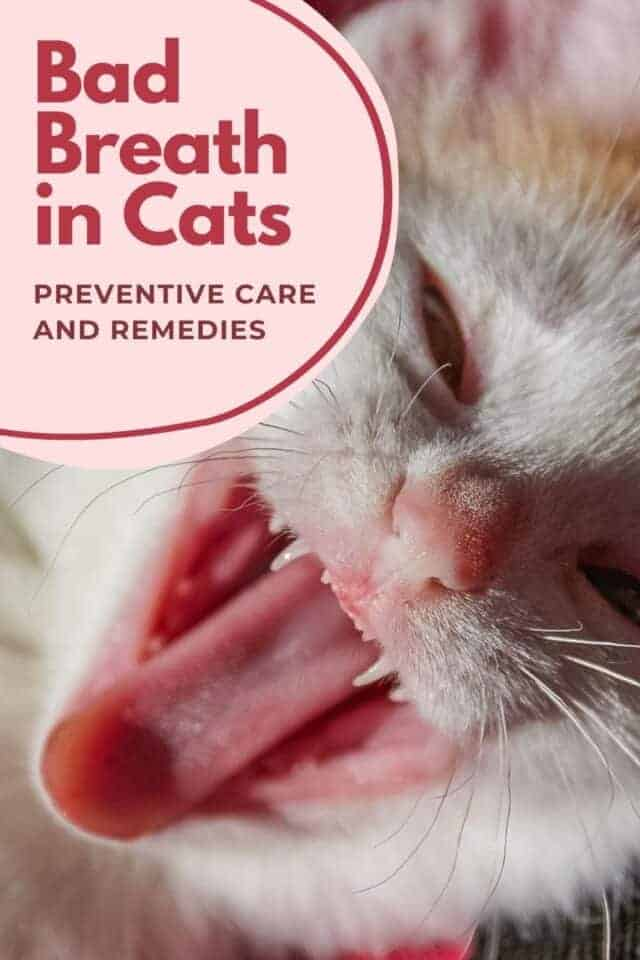 How To Treat Your Cat S Bad Breath Life Cats