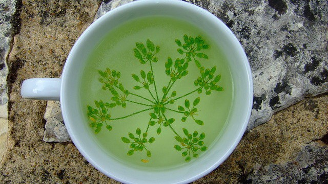 Fennel Tea Remedy of Flatulence