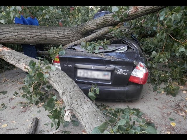 Photo of Дерево повредило автомобили в ЮЗАО Дерево повредило автомобили в ЮЗАО Дерево повредило автомобили в ЮЗАО sddefault