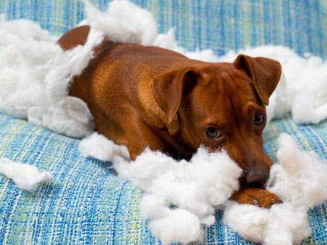 Do You Have A Destructive Dog?