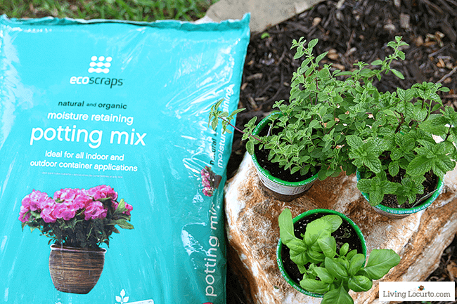 Organic Potting Soil - An Herb Fairy Garden is a fun container garden for your kitchen! Easy tutorial for how to make a mini fairy garden for your home.