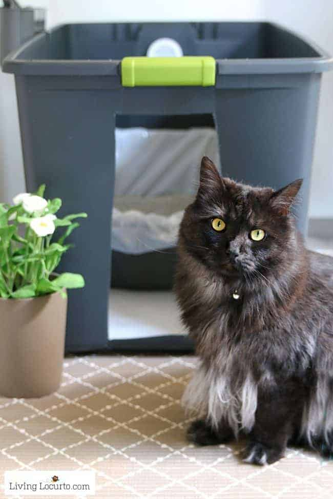 A DIY Cat Litter Box Holder is a simple homemade way to hide a kitty litter box. Give your cat's space a fresh makeover! Home hidden litter container.