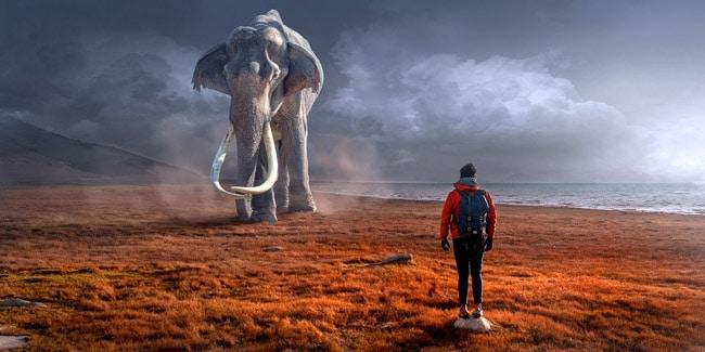 Слон в комнате