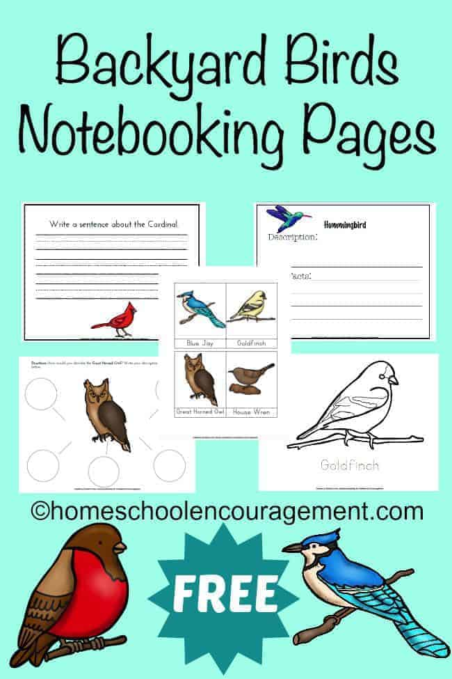 Are you learning about birds?  Take a look at this FREE Backyard Birds Notebooking Page set.  It's a great way to help your kids learn more about the birds that are common to your own backyard.