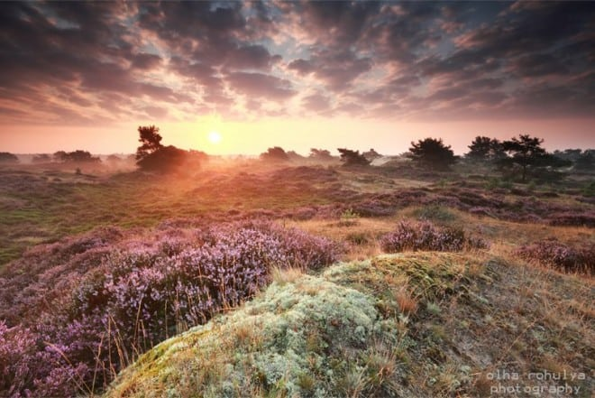 Mistige zonsopgang op het Aekingerzand