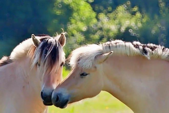 Paarden in Balloo Henk de Vos