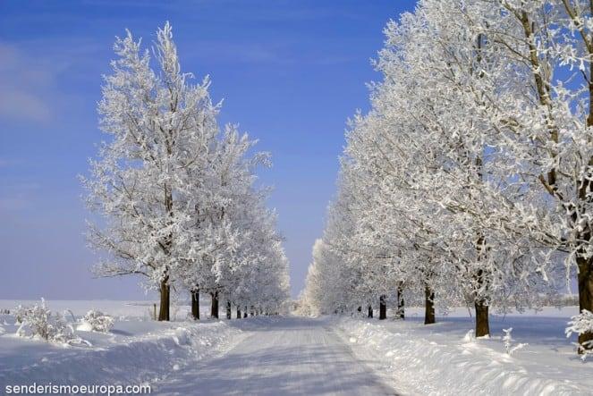 Arboles nevados en parque nacional de Rila