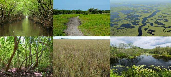 Different ecosystems of the everglades copy
