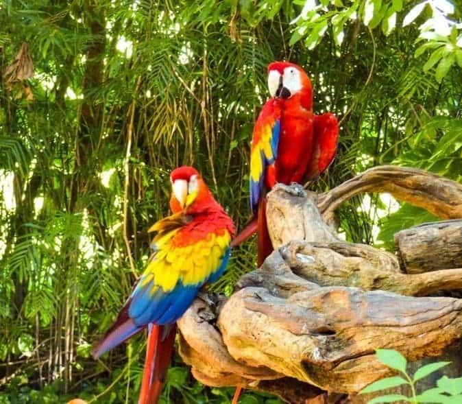 Parrots at Xcaret Park Mexico