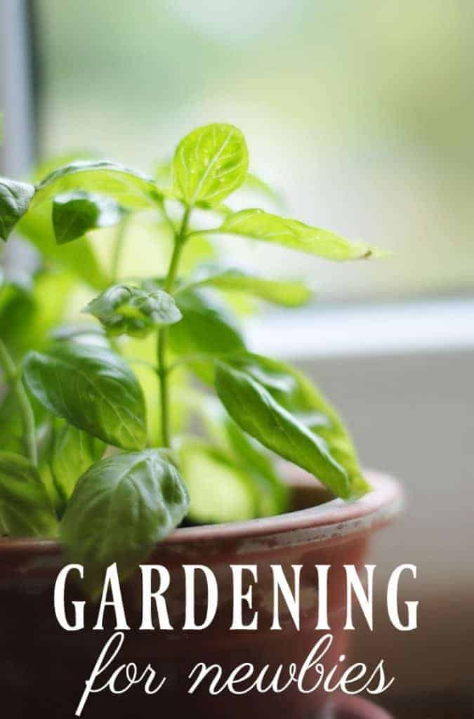 Interested in all things green but haven't tried your hand at growing your own food yet? Know absolutely nothing about gardening? Check out this great gardening for newbies post! #gardening #newbies #garden #growherbs