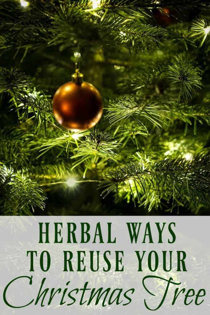 Learn these herbal ways to reuse use your Christmas tree to make remedies, foods, skincare products, and more before you throw it out! #christmastree #remedies #herbal #pine #fir #herbalremedies