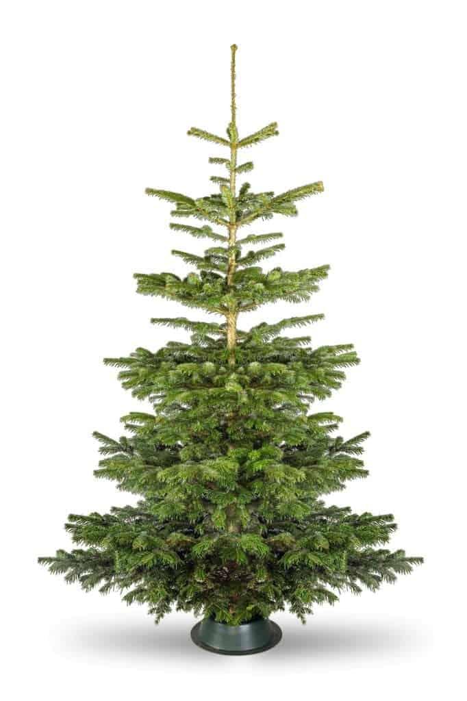 real-christmas-tree-hire