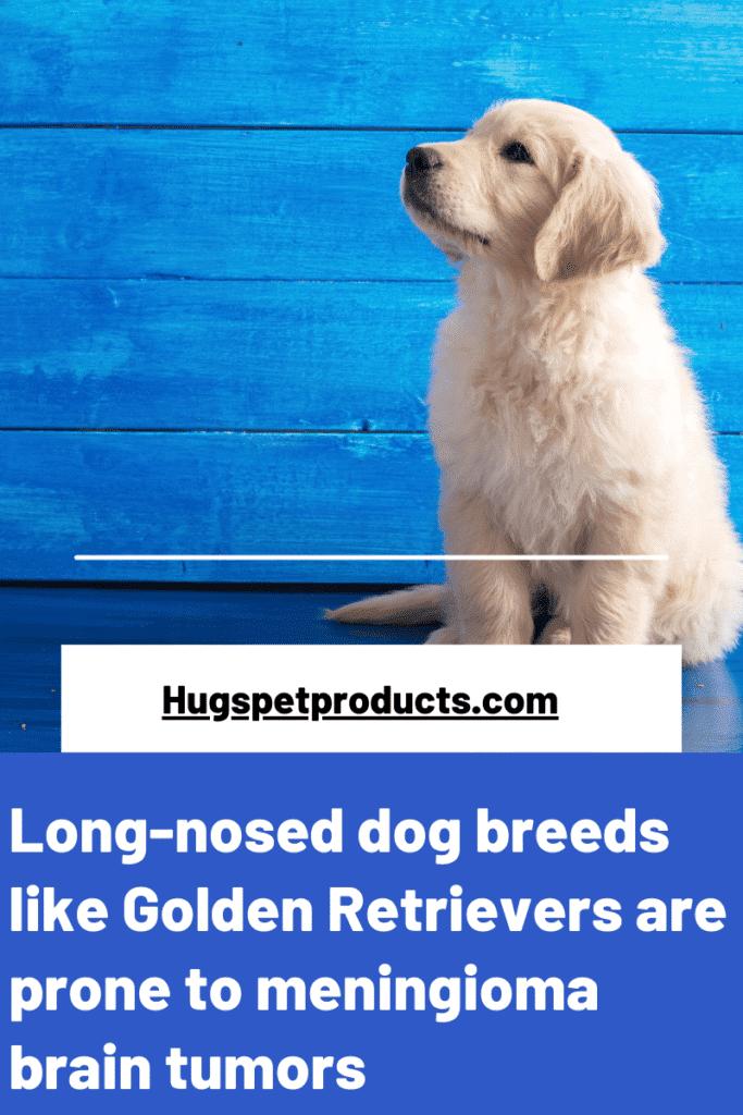 Long-nosed dog breeds are prone to meningiomas