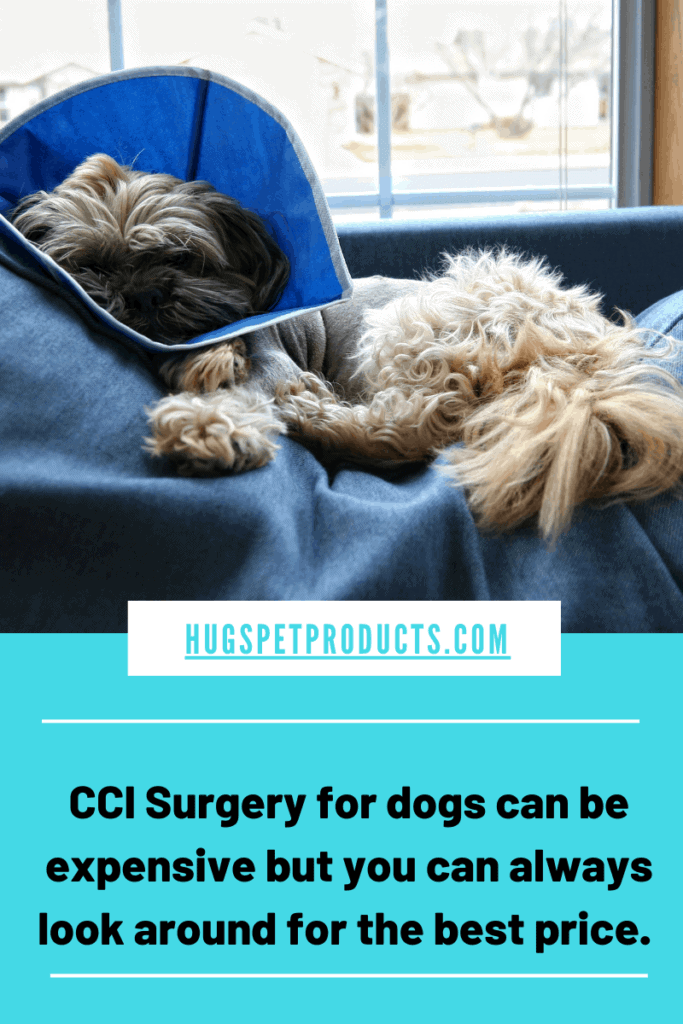 ACL Surgery Costs for Dogs can be Expensive