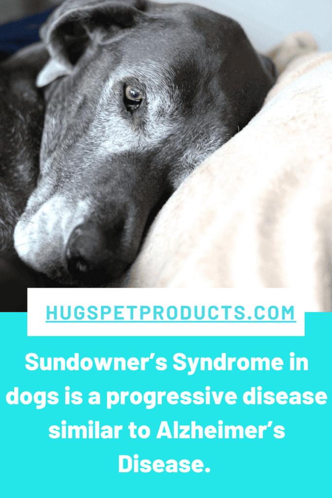 Sundowner's syndrome in dogs is a progressive disease.