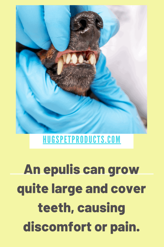 An epulis in dogs can grow very large in the mouth
