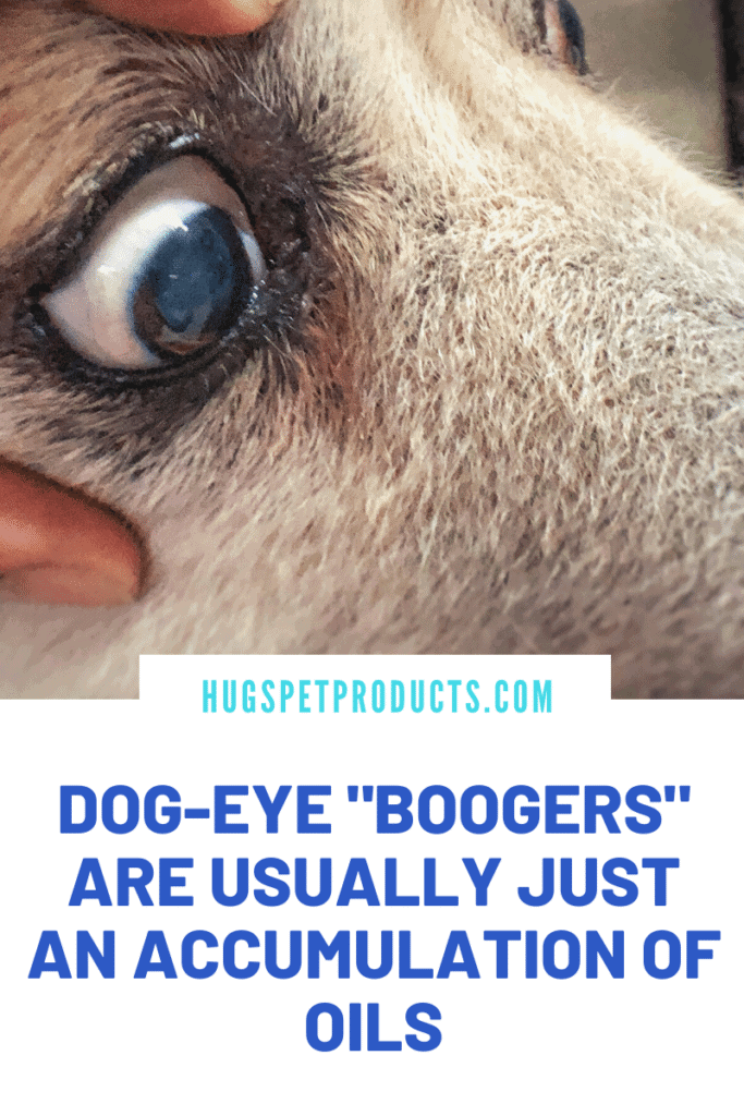 Dog eye boogers are usually just an accumulation of oils
