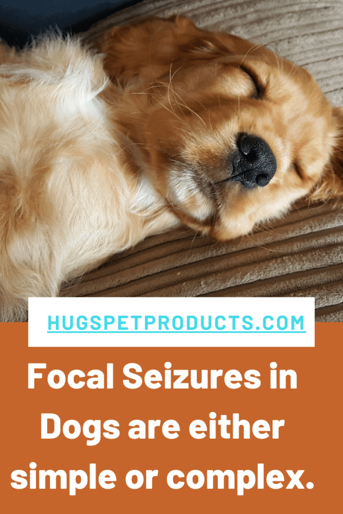Focal Seizures in Dogs can be either simple or complex.
