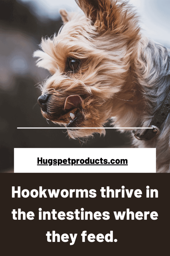 Hookworms in dogs are easy to contract through contaiminated soil.