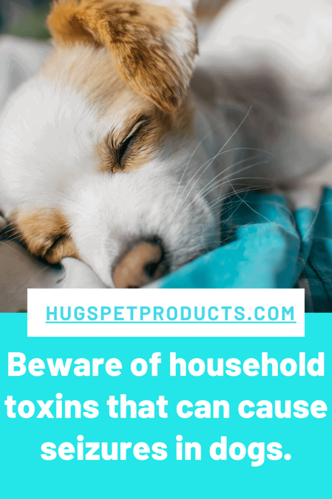 Beware of household toxins that can cause seizures in dogs.