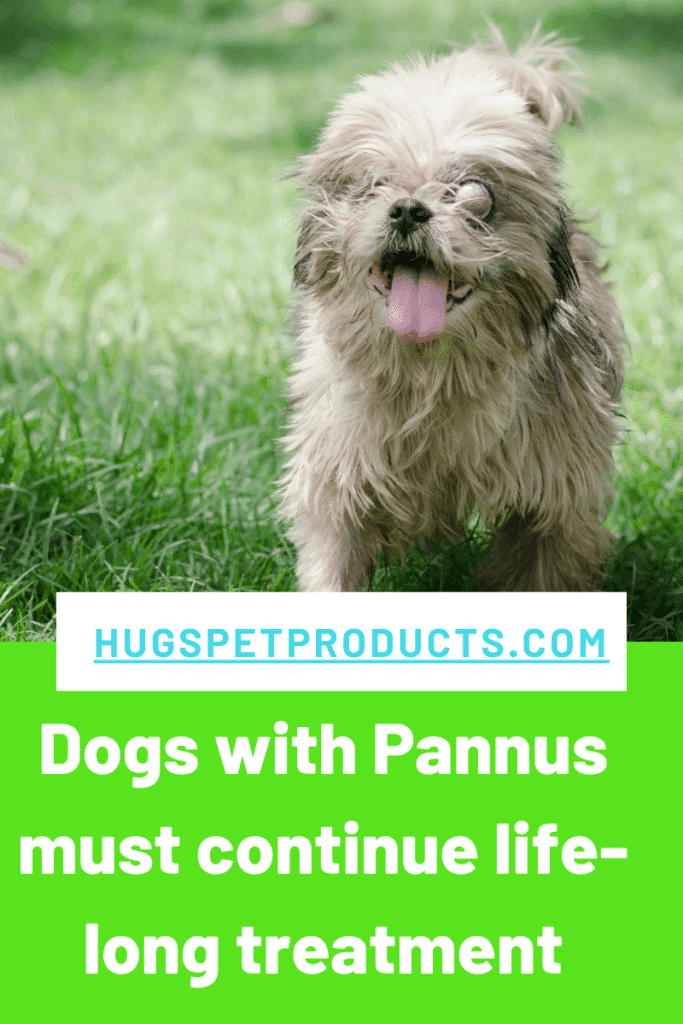 Pannus in dogs must be treated for life