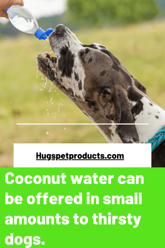 coconut water is safe for dogs in small amounts