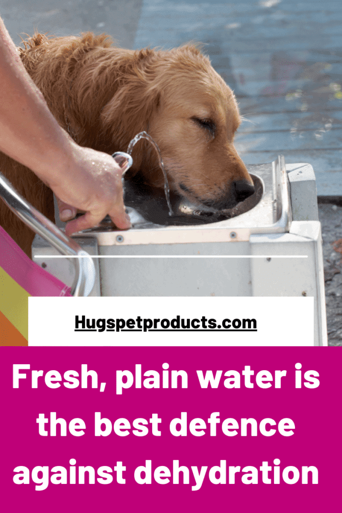 Fresh plain water is best for dogs to avoid dehydration