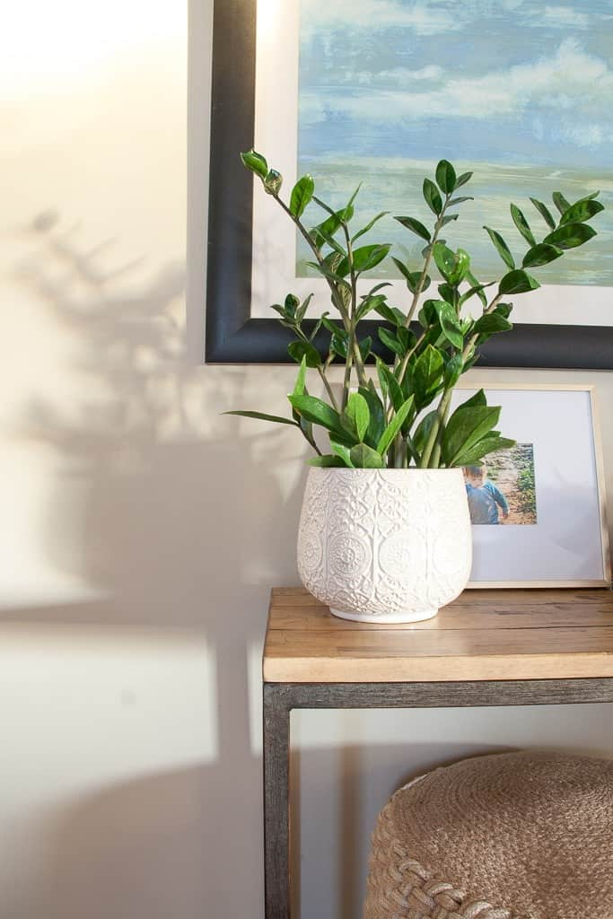 5 of the Prettiest, Air Purifying Plants you Should Bring into your Home