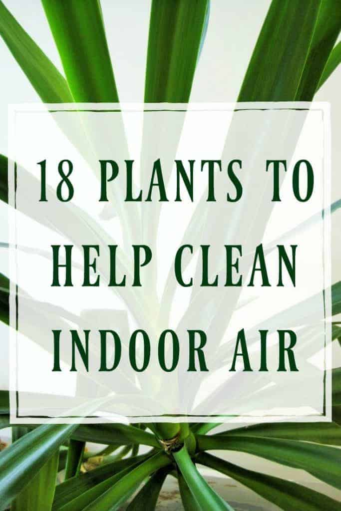 Plants to Help Clean Indoor Air