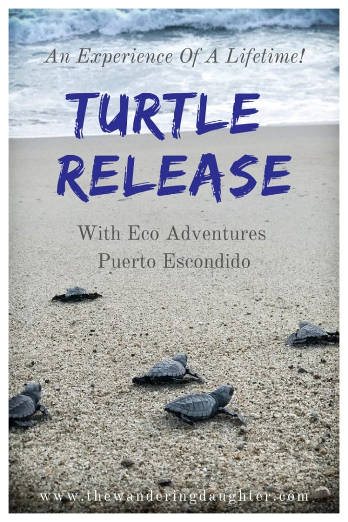 Turtle Release With Eco Adventures Puerto Escondido | The Wandering Daughter |  Experience a turtle release in Puerto Escondido. Participate in turtle conservation in Mexico by doing a baby turtle release. #seaturtles #turtleconservation #familytravel #PuertoEscondido #Mexico #sponsored