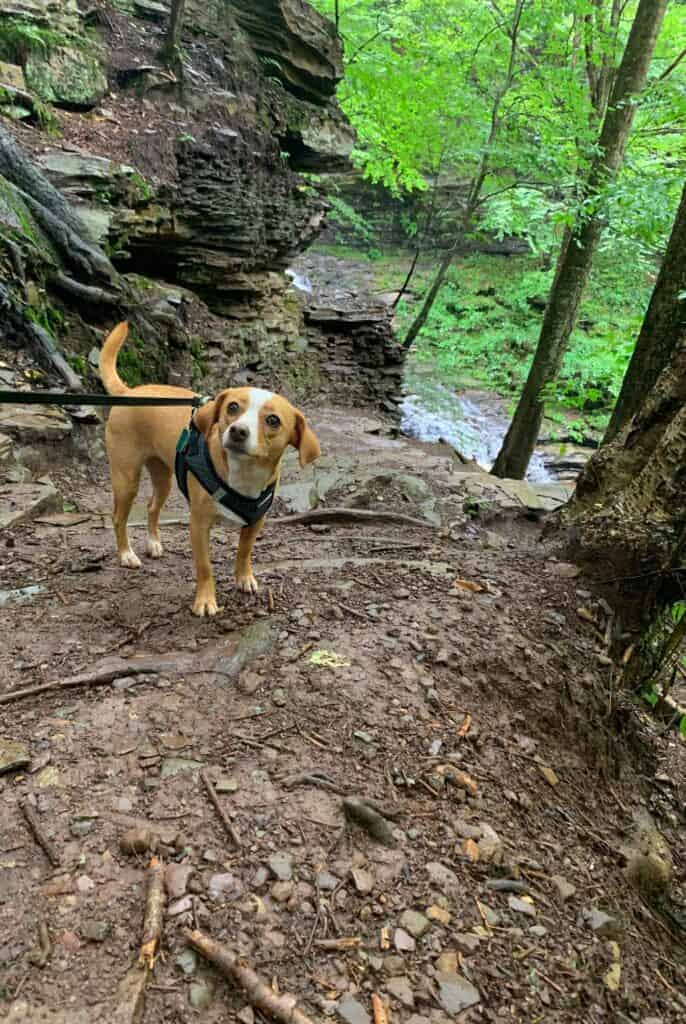 ricketts glen state park trail dog 2